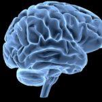 brain on black background