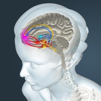 dopaminergic system