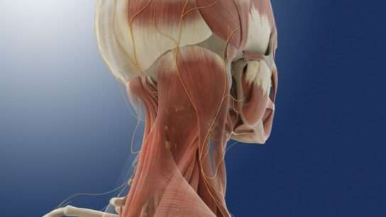 Greater occipital nerve