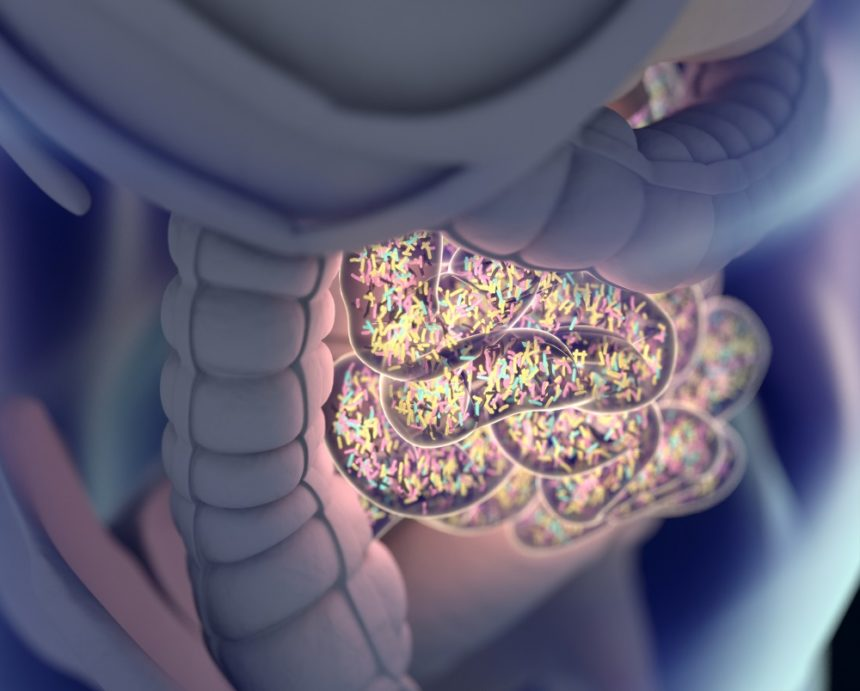 gut bacteria, microbiome