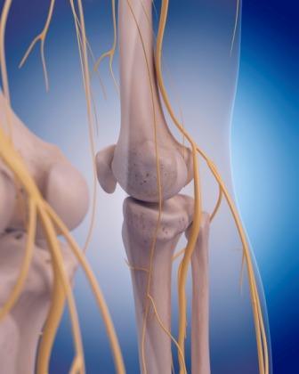 mid leg nerves