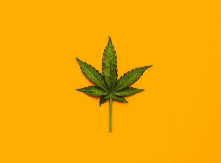 A cannabis leaf against an orange background.