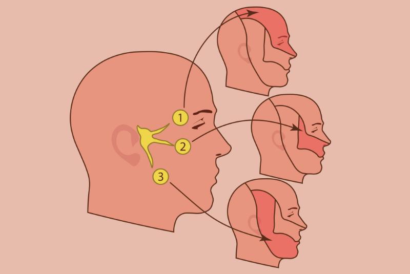 Trigeminal nerve illustration