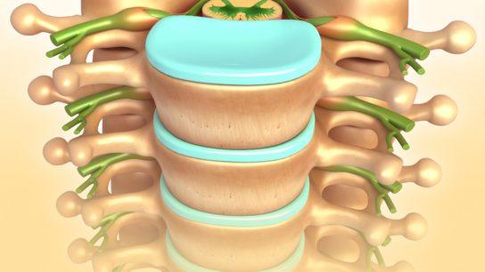 Illustration of lumbar vertebrae.